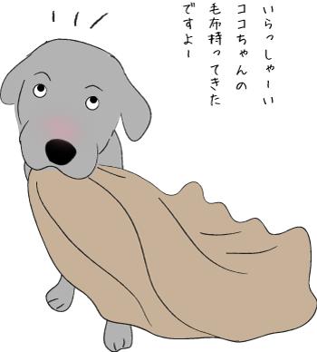 毛布とラブラドール