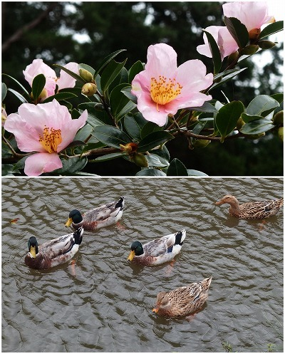 161024ラフォーレ修善寺花と鳥