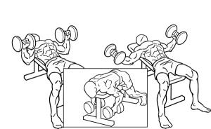 Dumbbell-bench-press-2-horz_201608130646340ef.jpg