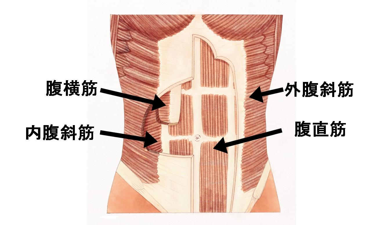 Flat-stomach-muscles.jpg
