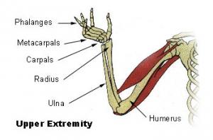 Illu_upper_extremity.jpg