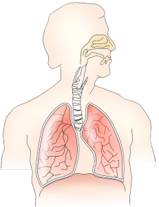 anatomy-145696_960_720.png