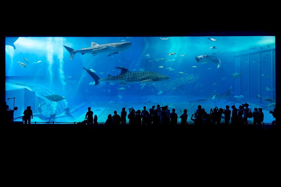 aquarium-725798_960_720.jpg