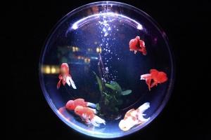fish-bowl-846060_960_720.jpg