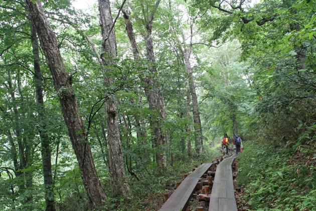 20160713山の鼻へ至る林道