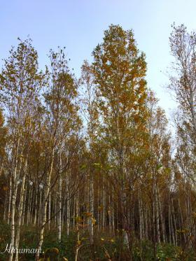 北海道の秋、深まる・・・そして、私のハギレ収納ケース