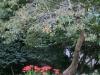平成30年9月お花