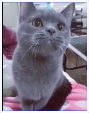魔女の愛猫01