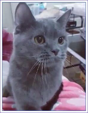 魔女の愛猫04