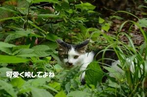 DSC_3262.jpg