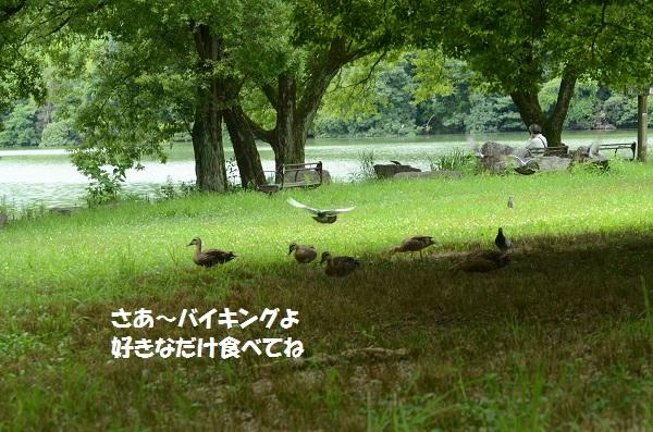 DSC_3332.jpg