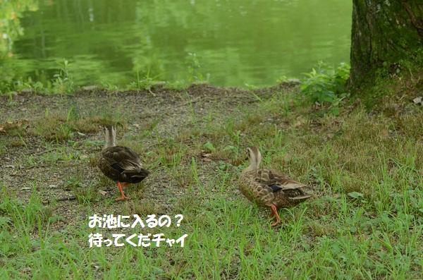 DSC_3352.jpg