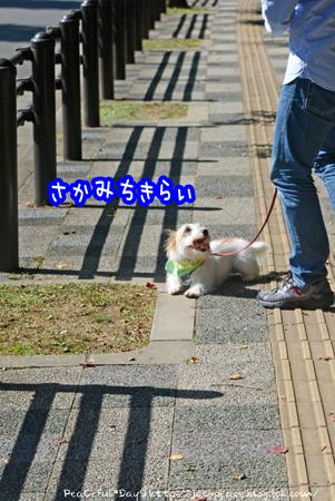 161024_nara.jpg