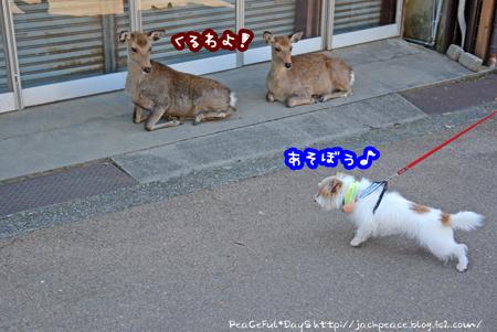 161024_nara14.jpg