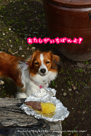 161031_hatake8.jpg