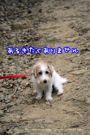 161106_fudoki3.jpg