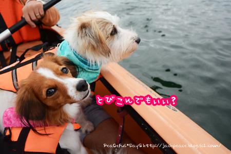 kayac3.jpg