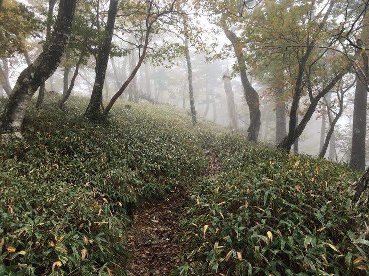 2018稲村ヶ岳/笹道
