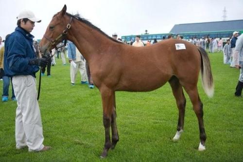 【競馬】種牡馬ディープインパクトには3タイプ存在する件