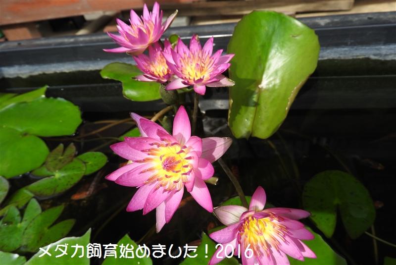 DSCN0652.jpg