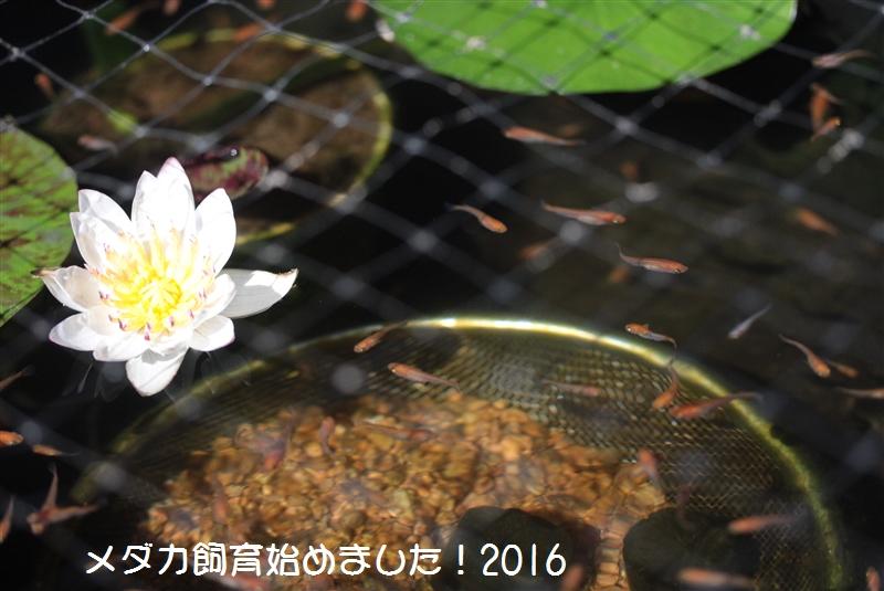 IMG_4242.jpg