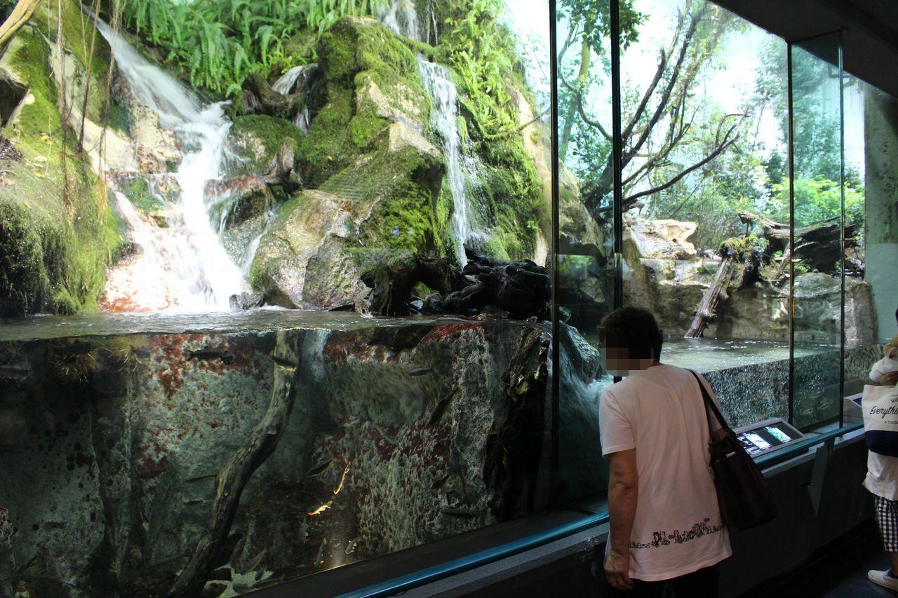 鳥羽水族館-43