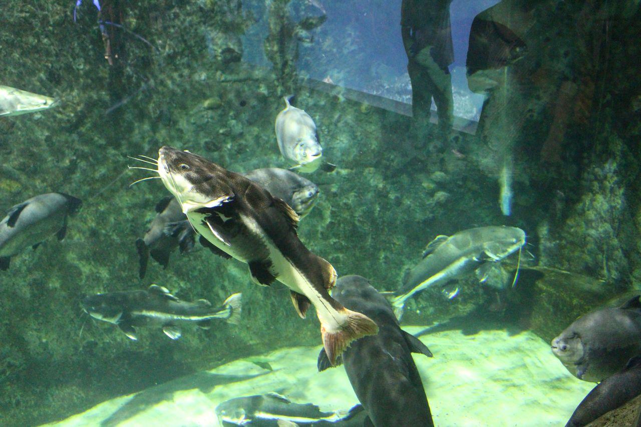 鳥羽水族館-51