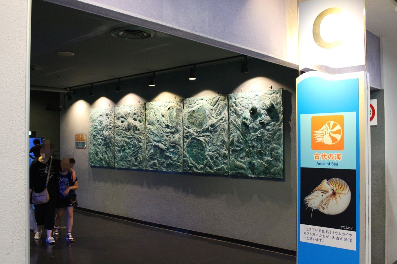 鳥羽水族館-64