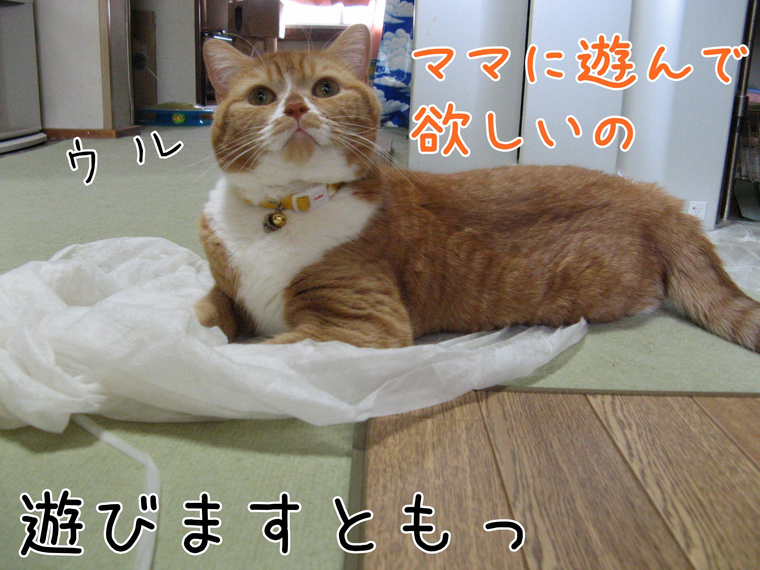 20160912-091446-01.jpg