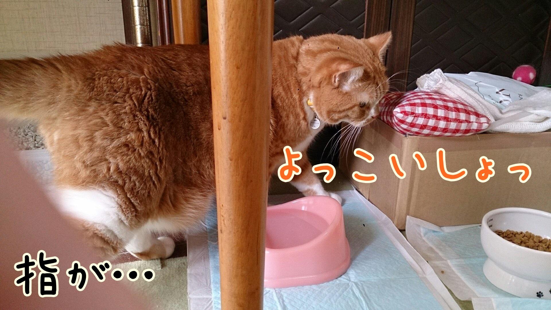 DSC_0415-01.jpg