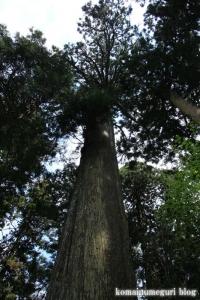 箱根神社(神奈川県足柄下郡箱根町元箱根)50