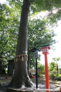 氷川神社(足立区東伊興)16