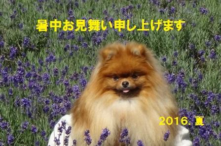 201607271434574db.jpg