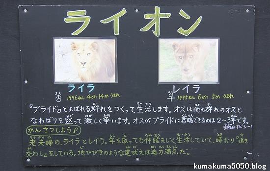旭山動物園_10