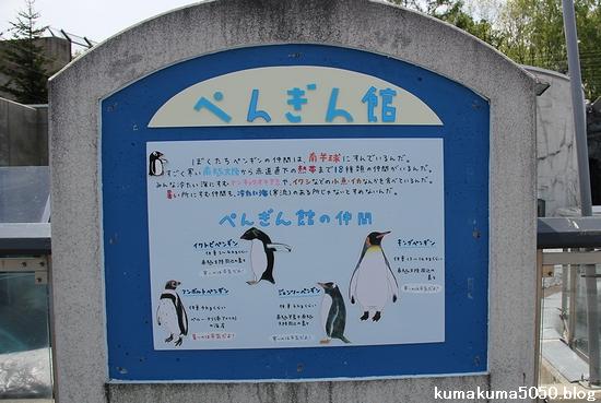 旭山動物園_24