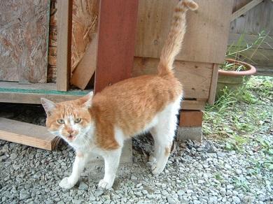 サスケに似た猫