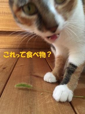 これって食べ物?