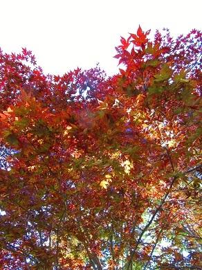 イマイチな紅葉