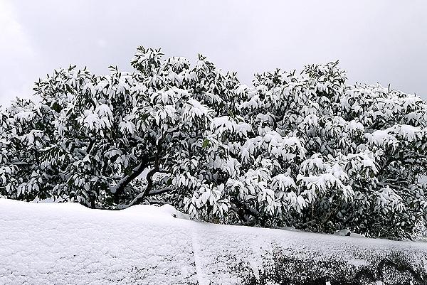 みかんに雪