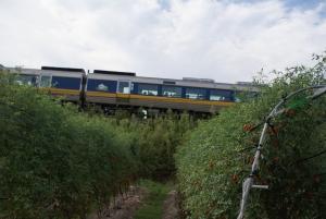 160903電車とロッソ
