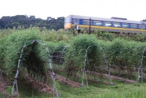 160913北圃場のロッソと列車