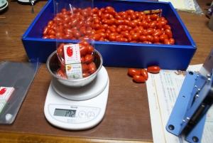160929トマトの袋詰め