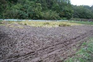 161023モチ米の田の様子1