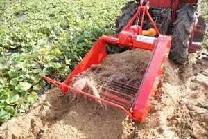 161026芋ほり機で掘る1