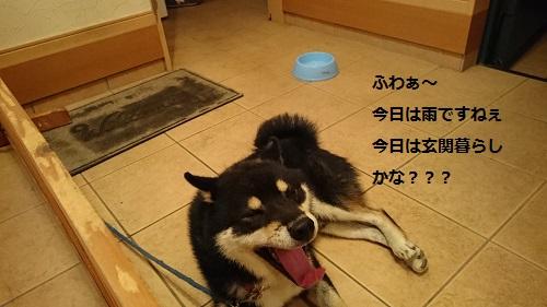 201610181508552cc.jpg
