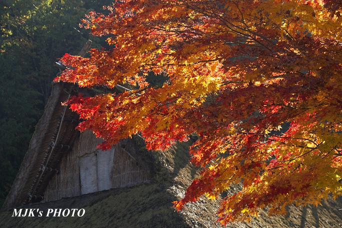 hidanosato6468.jpg
