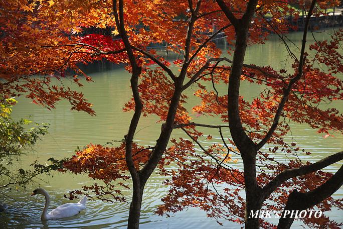 hidanosato6481.jpg