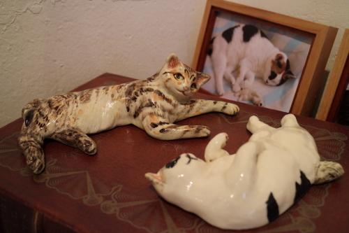コトラと白玉