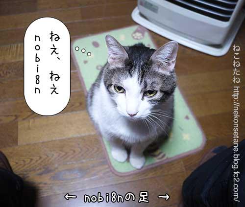 ねえねえ、nobi8n