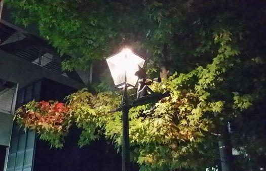 20161026の街路樹